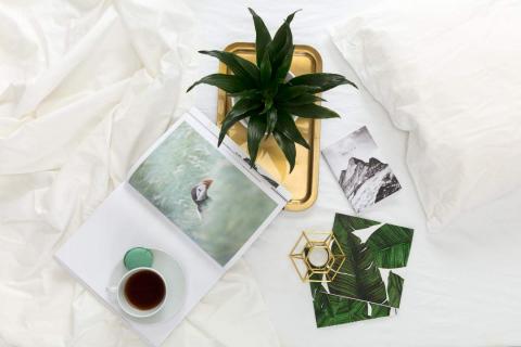 dracaena-plant-on-golden-tray-1-1